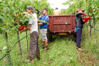 Italia, în criză după plecarea muncitorilor români. Ministrul Agriculturii negociază întoarcerea lor urgentă