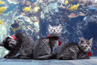 De ce au fost aduse 5 pisici la un acvariu din SUA. Reacţia lor când văd peştii