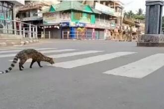 Animalele au invadat orașele. Imagini pe care le putem vedea o dată în viață