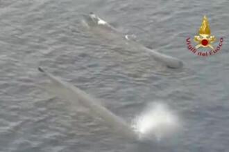 """""""Se întâmplă foarte, foarte rar"""". Unde au fost văzute două balene uriașe"""