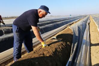 Un bărbat din Suceava, aflat la cules de sparanghel în Germania, a murit. Ce spune soția sa