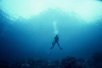 Locul unde turiştii pot înota cu delfinii, printre corăbii scufundate acum mii de ani