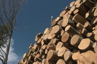 1200 de camioane încărcate cu lemne vor pleca din zona Cheia. Apelul ministrului Mediului