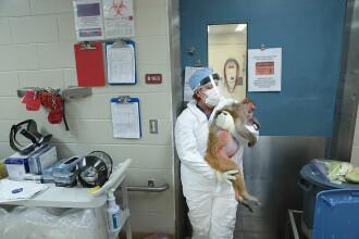Vaccinul împotriva COVID-19 care a dat rezultate pe maimuțe. Ce spun cercetătorii chinezi
