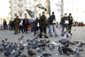 Hrănirea porumbeilor, interzisă la Timișoara. Nu se mai permite nici plimbarea animalelor de fermă cu autobuzul