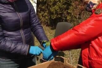 Atelier cu răsaduri, pentru copiii din Cluj Napoca. Cei mici au fost încântați să planteze în ghivece