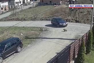 Un șofer din Cluj a trecut cu mașina peste un câine. Bărbatul s-a ales cu dosar penal
