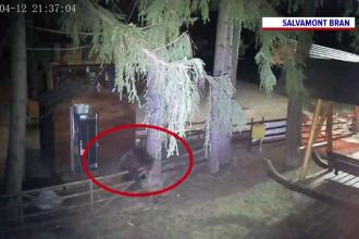 Un urs, surprins de camerele de supraveghere din Bran. Ce făcea animalul noaptea