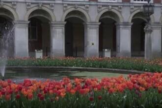 Reședința regelului Henric al VIII-lea al Angliei, transformată într-o uriașă grădină cu flori