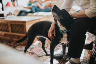 Rusia renunță la posibilitatea confiscării animalelor de companie ale persoanelor cu datorii