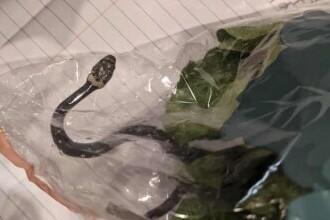 Un cuplu din Australia a găsit un șarpe veninos într-o pungă cu salată luată de la supermarket