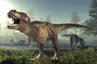 Studiu: Dinozaurul T-Rex, mai lent decât s-a crezut până acum. Putea alerga cu doar 5 km/h