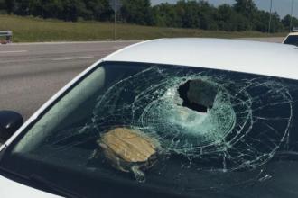 Accident neobișnuit în SUA. O broască țestoasă s-a prăbușit pe parbrizul unei mașini care circula pe o autostradă. FOTO