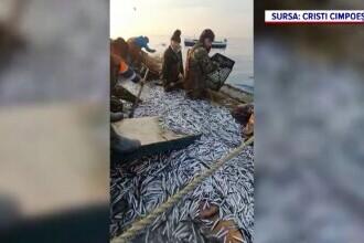 Pescarii români promit că vom mânca mai multe pește din Marea Neagră. De ce nu vom mai importa