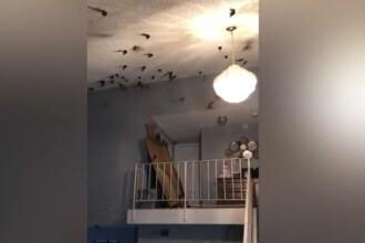 """O familie din California s-a trezit cu casa invadată de păsări. """"Peste tot era plin, o luaseră razna"""""""