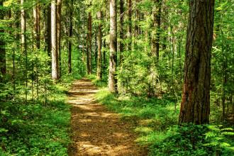 Descoperirea uimitoare făcută de un excursionist într-o pădure. Ar fi fost dezgropate de animale sălbatice