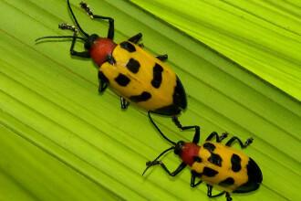 Nu ai manca niciodata insecte ori viermi? Mai gandeste-te!