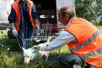 """Reactii locale la adoptarea Legii Cainilor Comunitari: """"Romania sfideaza iar forurile europene"""""""