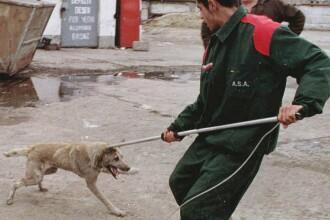 Cine în România rezolvă şi problema câinilor vagabonzi?