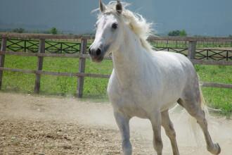 In timp ce noi batjocorim caii, argentinienii ii considera metoda de tratament pentru copiii autisti
