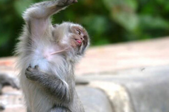 Circ intr-o gara din Tokyo. Vedeta: o maimuta!