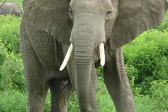 Elefantica Tania a iesit la plimbare. Prezenta ei a facut senzatie printre vizitatorii parcului zoo