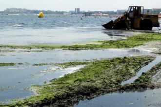 Norvegienii ne dau bani ca sa transformam algele in ingrasamant