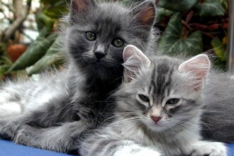 Iubeste atat de mult pisicile, incat le strange de pe strazi! Are 136 acum!