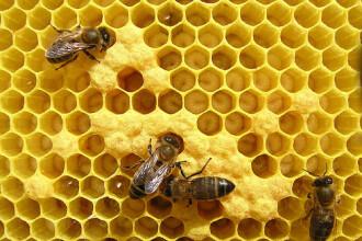 Si fabricile de miere pot fi finantate cu fonduri europene!