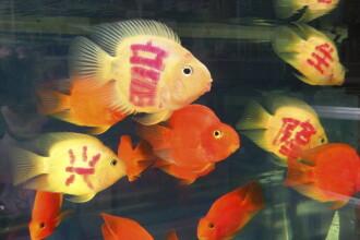 Chinezii se dau in vant dupa pesti tatuati care poarta noroc