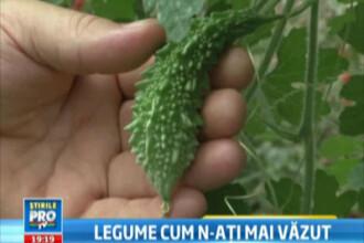 Legume made in Romania: castravetii care explodeaza si pepene cu gust de coniac. Ai cumpara?