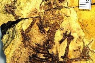 Un secret care a stat ascuns timp de 160 de milioane de ani. Cine e adevaratul stramos al omului