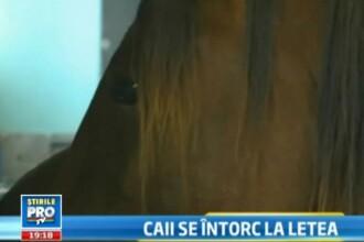 Sfarsit fericit pentru caii salbatici din padurea Letea, prinsi si torturati de localnici