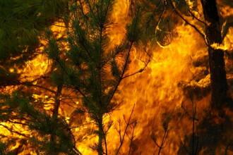 Incendiu puternic de padure in judetul Mures, in muntii Calimani