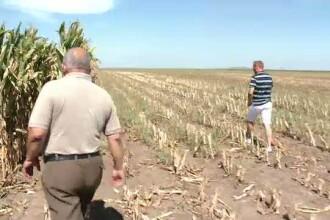 Seceta a distrus culturile agricole. Toti fermierii din Cluj vor beneficia de ajutoare banesti