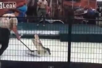 VIDEO. Momentul in care un dresor este muscat de brat de aligatorul din spectacolul sau