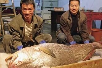 Un barbat din China s-a imbogatit peste noapte dupa ce a vandut un peste cu 470.000 de dolari