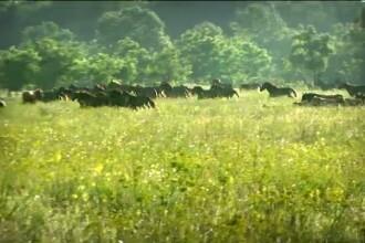 Le-a taiat limbile cailor ca sa nu-i manance iarba. Un veterinar incearca acum sa ii salveze