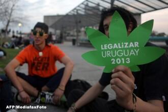 Uruguay ar putea fi prima tara cu o piata legala de productie, distributie si vanzare a marijuanei