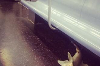 Un pui mort de rechin a fost descoperit intr-un metrou din New York