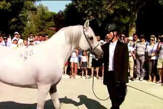 Herghelia din Mangalia - singura din Romania unde pot fi admirati 350 de cai din rasa pursange arab