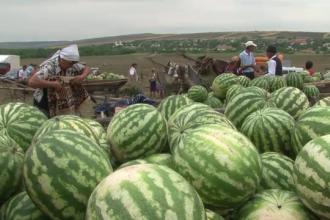 Festivalul pepenilor din Lunca, Botosani. Fermierii se lauda ca sunt mai buni decat cei de Dabuleni