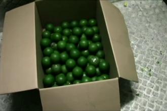 O tona de cocaina ascunsa in lamai verzi, descoperita de Politia columbiana