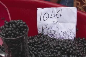Afinele, fructele care promit un profit si de 8.000 de euro pe tona. Strainii le cauta in special pe cele bio