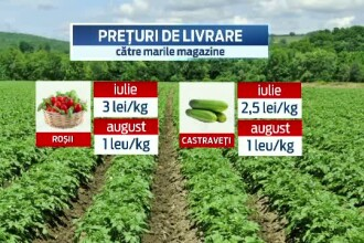 Producatorii de legume din Romania, loviti de embargoul impus de Rusia Uniunii Europene. Preturile s-au prabusit cu 70%