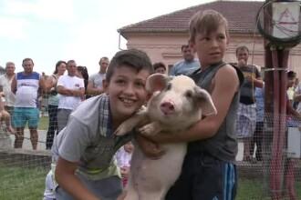 Zeci de copii au luat parte la un concurs de prins purcei, la Pecica, in judetul Arad