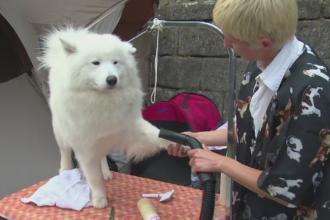 Concurs canin in Alba Iulia. Cati bani investesc stapanii in animalele de companie medaliate