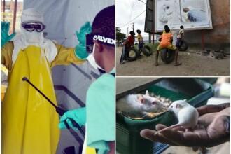 Ce se intampla cand supravietuiesti virusului Ebola si cat de eficient e ZMapp, tratamentul creat din anticorpi de la soareci