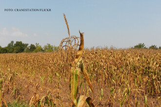 Fermierii vor sa-i dea pe meteorologi in judecata, pentru ca n-au fost avertizati de seceta. ANM: