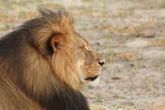 Fratele celebrului Cecil NU a fost ucis, in ciuda zvonurilor. Jericho a fost vazut cu o leoaica, intr-o